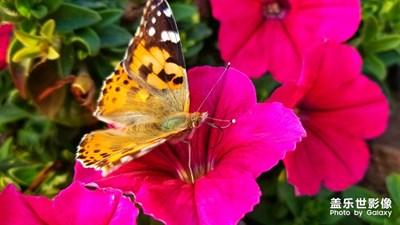 冬天的蝴蝶