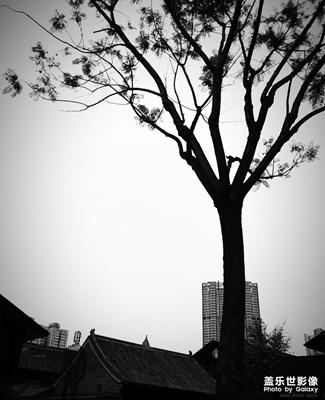 树 , 其它