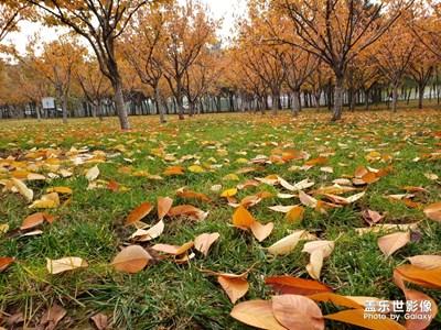 秋天的美丽风景