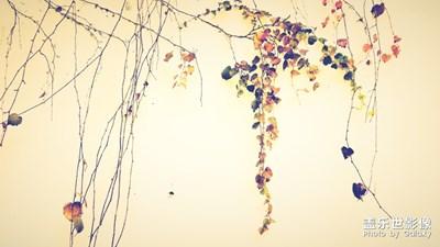 冬日如画《续》