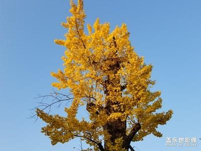 中国色彩-遇见最美
