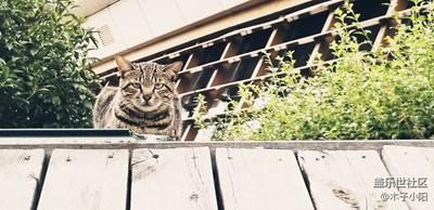 路边的一只小猫咪