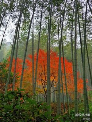 【纬度的色彩】+红色秋枫