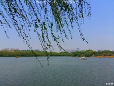 【春的记忆】+绿城 南湖春晓