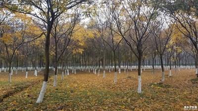 风雨中看红叶彩林