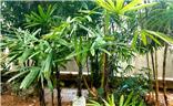 探寻热带雨林的花草树木