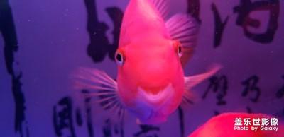 爱笑的小鱼