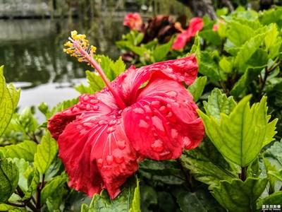 【迎春万象】三星A6s游广东四大名园之可园