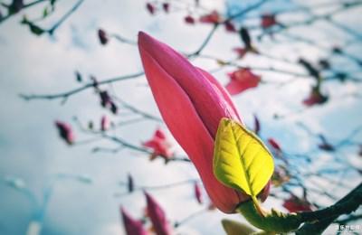 【迎春万像】+春是前奏