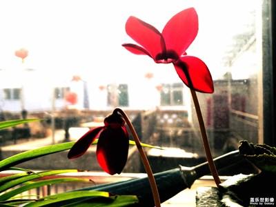 【迎春万像】+室内的春天