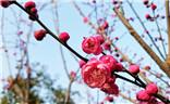 【迎春万象】+疏影横枝梅催春