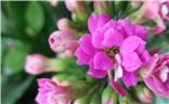 【迎春万像】+花开