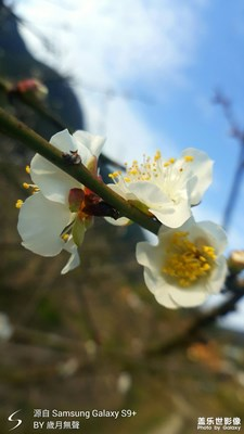 在大寒里期盼春天