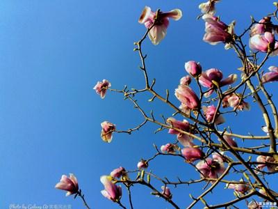 盖乐世摄影周赛第74期—春的畅想