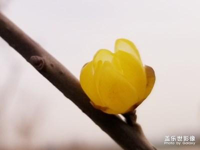 【春的畅想】+赏梅