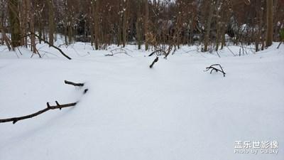 瑞雪兆丰年-立春后的大雪