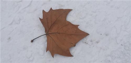 有雪的冬日才美