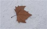 【这世界正美】+有雪的冬日才美