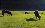 [这世界正美]---牧牛图