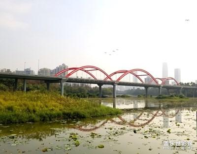 【爱上一座城】+深圳洪湖