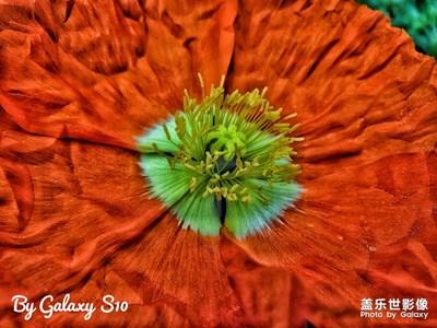 【By Galaxy S10】春光乍泄