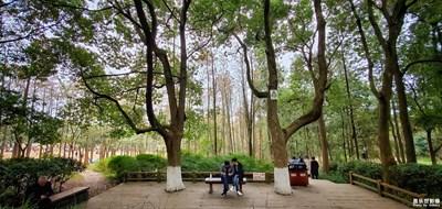 【三星S10】成都市植物园采风