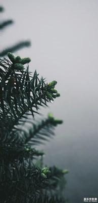 【迷雾森林】