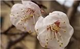春来了,花开了