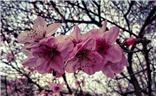 【踏春】风和日丽,百花齐放