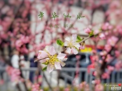 【踏春】+春光明媚