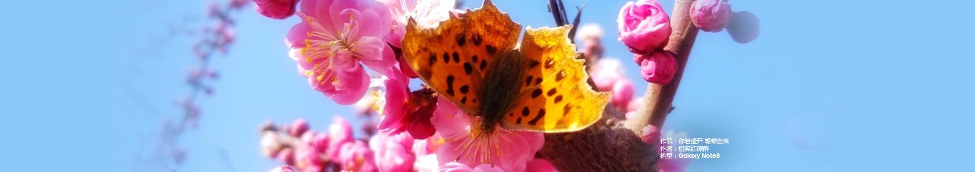 你若盛开 蝴蝶自来