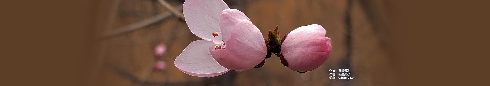 【踏春】+春暖花开