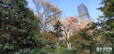 【踏春】+杏花公园