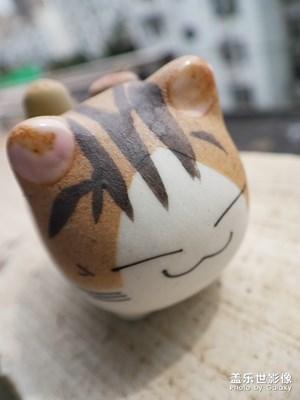 猫和石生花