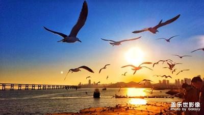 【踏春】+ 海贝鱼跃鸟梭飞,晚霞红海腾日魂。