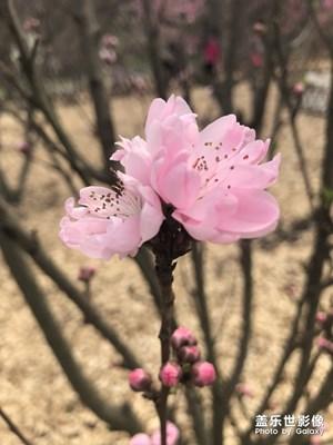 【风光之美】+哏儿都北郊之春