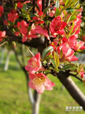 春光正好,赏花赏月!