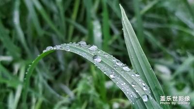 春雨贵如油-雨后随拍