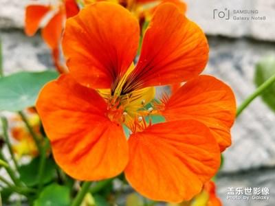 笑看花开是一种好心情,静赏花落是一种好境界;