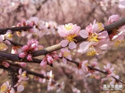 【四月你好】+哏儿都的芳菲四月
