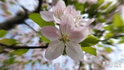 【四月你好】-春天的色彩