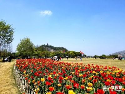 【四月你好】+辰山植物园