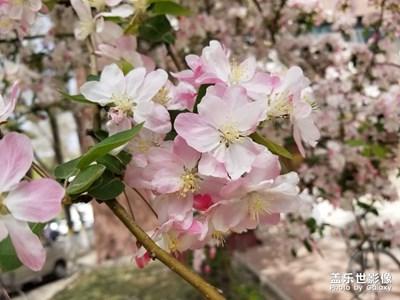 【阳光的味道】+春光灿烂的馈赠