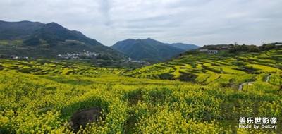 覆卮山之旅-那盛开的油菜花