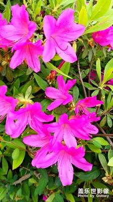 粉色的回忆