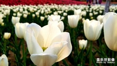 邀你来看花