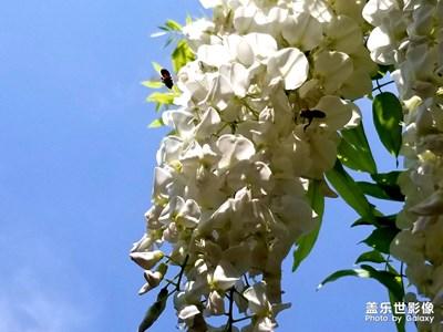 嘉定紫藤公园