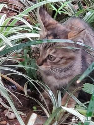 大世界下的小猫咪