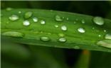 雨露 绿叶 花