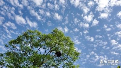 蓝天-白云-绿叶-花花